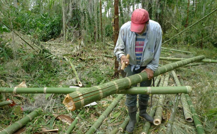 Tutorial Waldwirtschaft mit Bambus